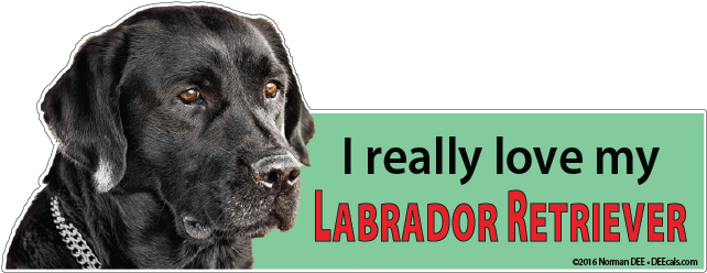 'I really love my Labrador Retriever' next to a black lab.